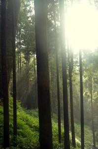 Lesní rezervace