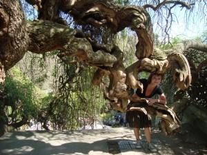 Popletený strom