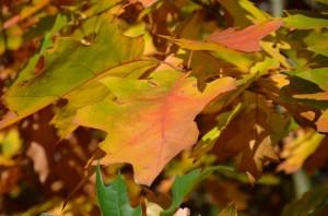 Podzim v Tišnově