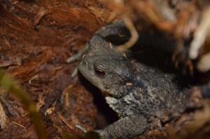 Žába na prameni